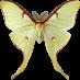 Gesundheit, Elysium und der Goldene Drache. Keep informed!